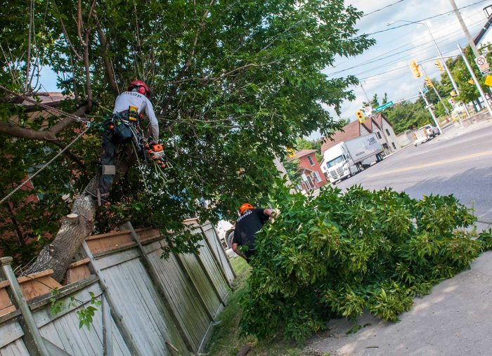 Factors Affecting the Price of Tree Care
